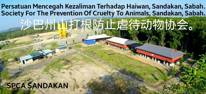 SPCA Sandakan Animal Shelter