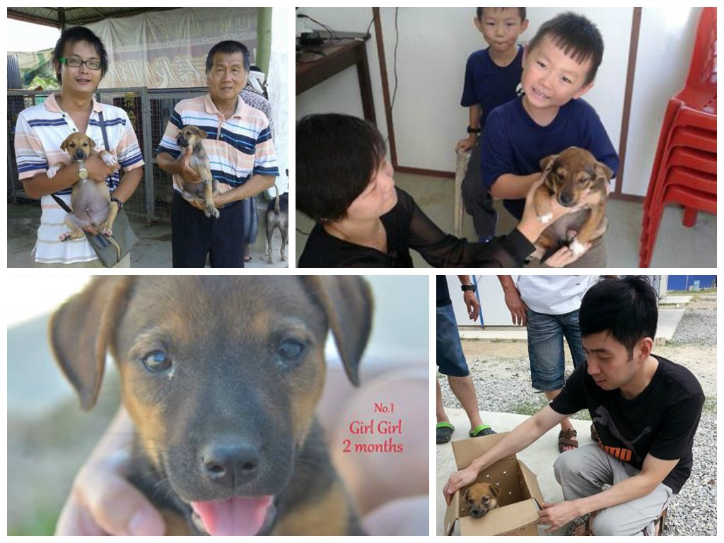 Animal adoption from SPCA Sandakan