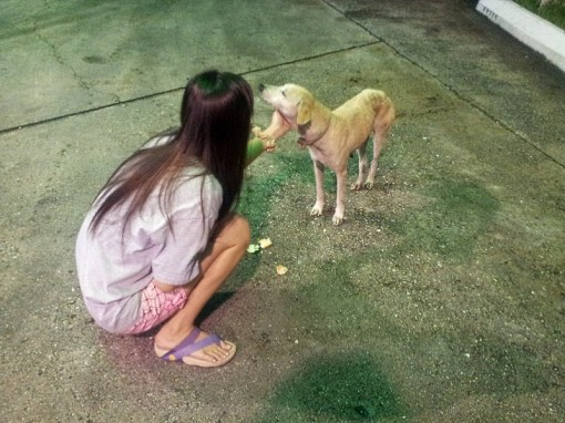 Befriending Lost Dog in Downtown Sandakan