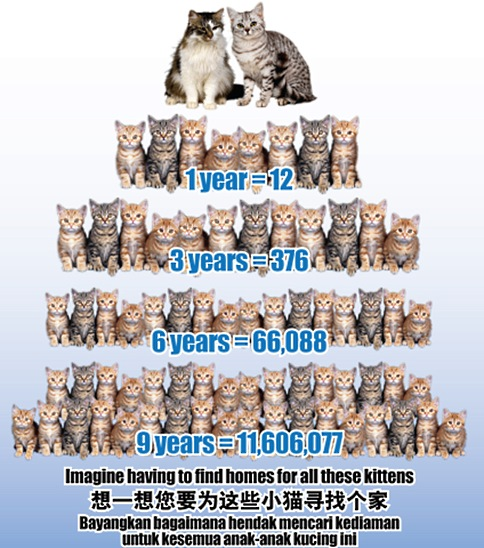 Over-population of cats