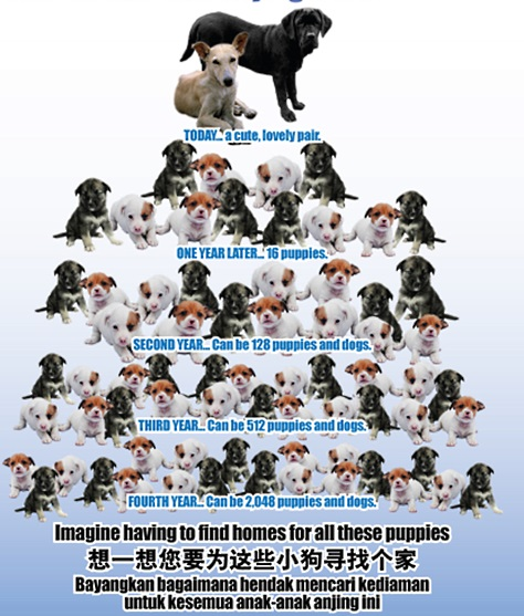 Over-population problem of dogs