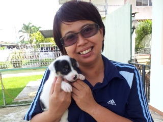 SPCA Sandakan - adopt a pet from SPCA
