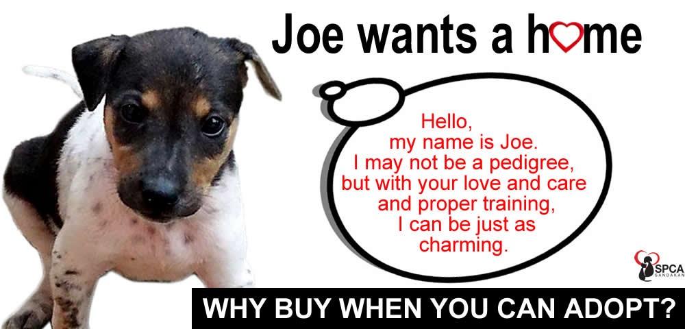 SPCA Sandakan animal adoption banner