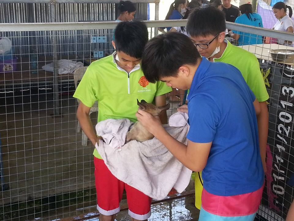 Volunteers at SPCA Shelter Sandakan