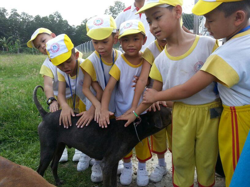 Yuk Choi Kindergarten Excursion to SPCA Shelter
