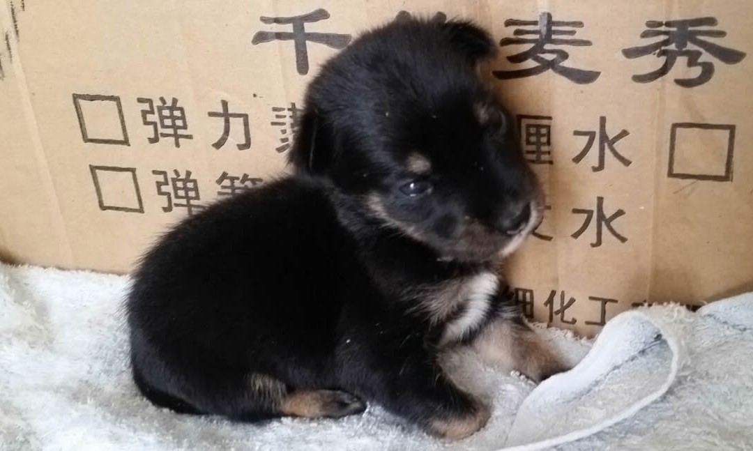 Newborn Puppy Abandoned