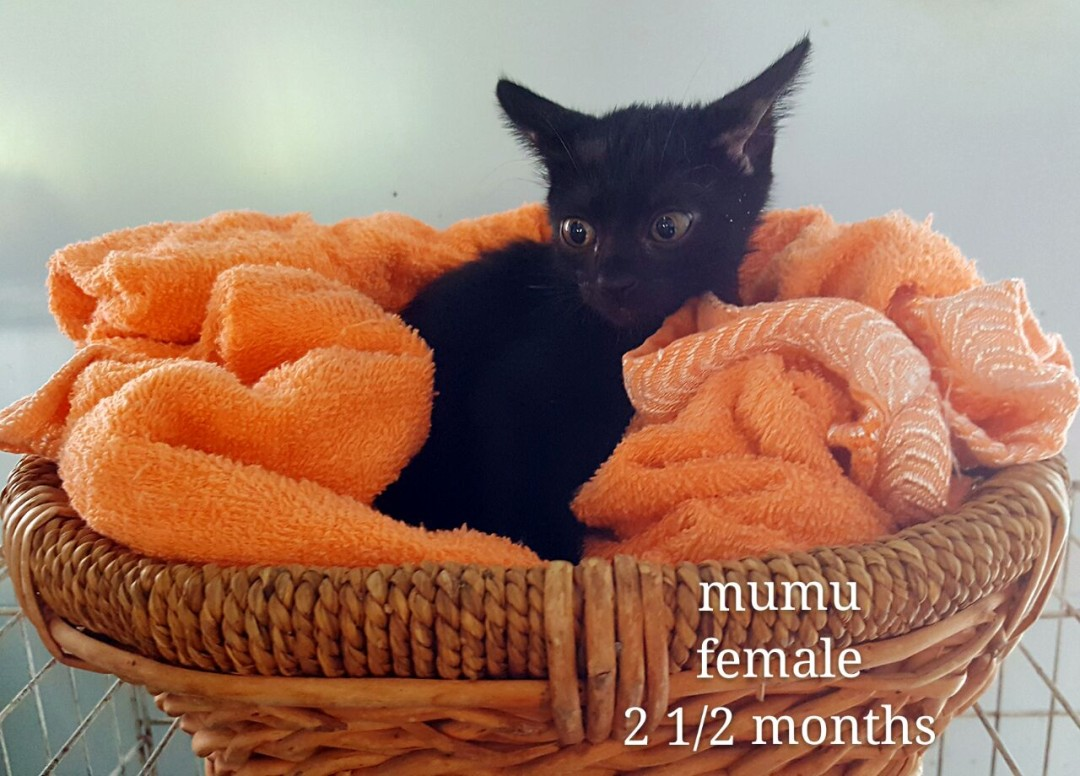 Mumu – 2.5 month old
