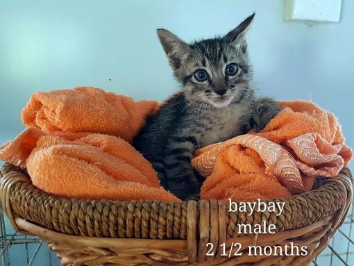 Bay Bay – 2.5 months