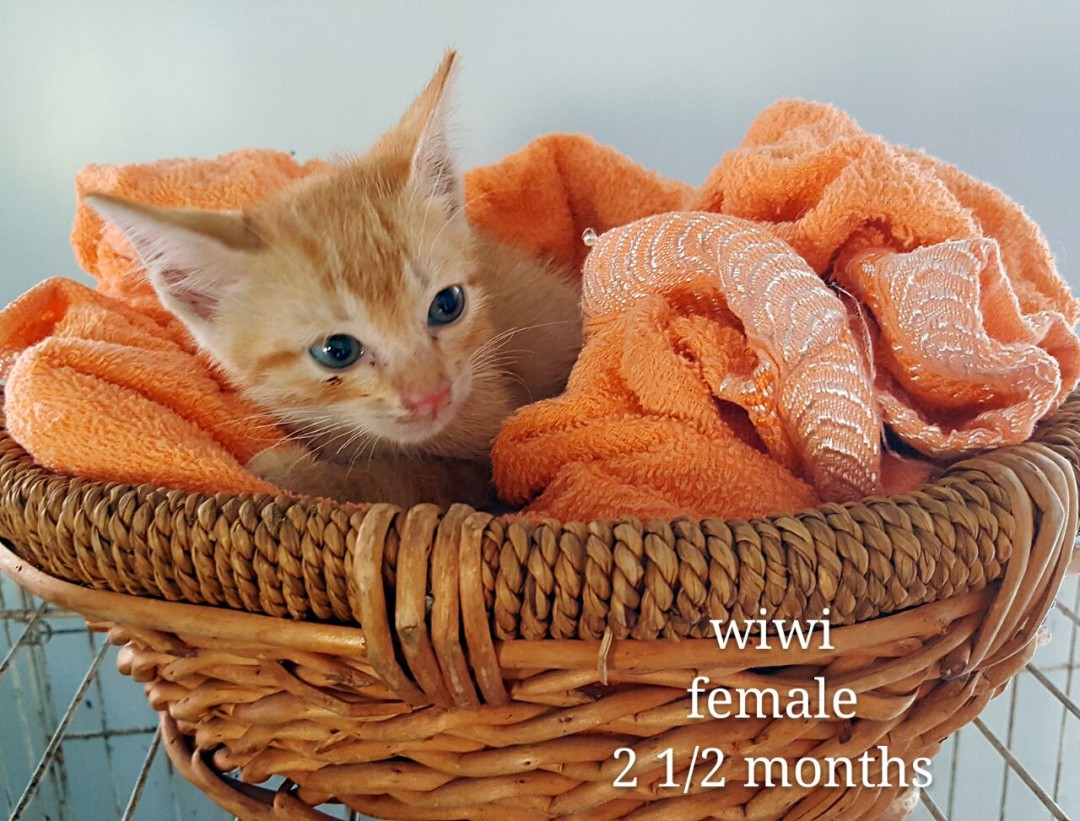 Wiwi – 2.5 months old