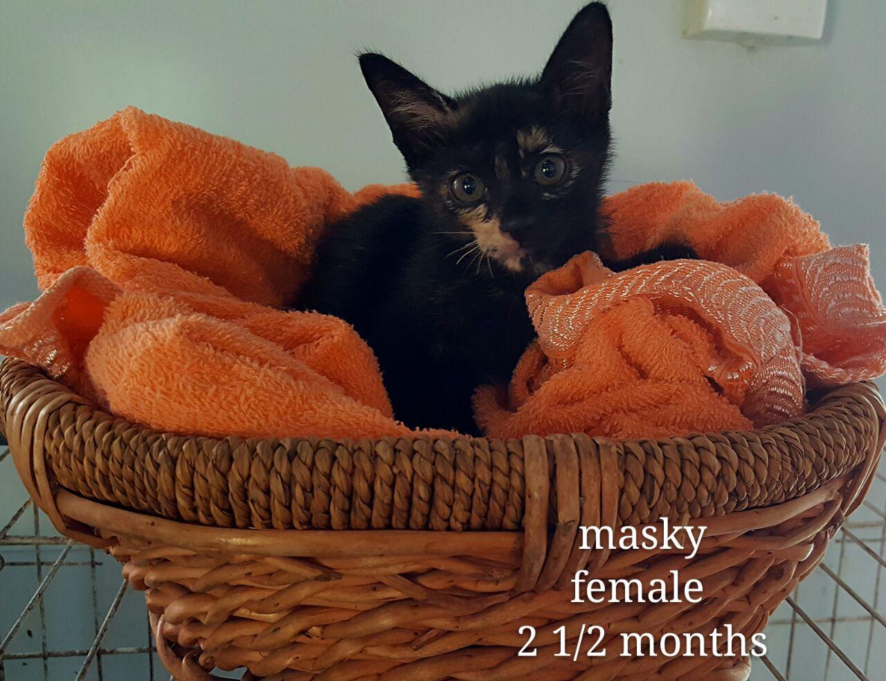 Masky – 2.5 months