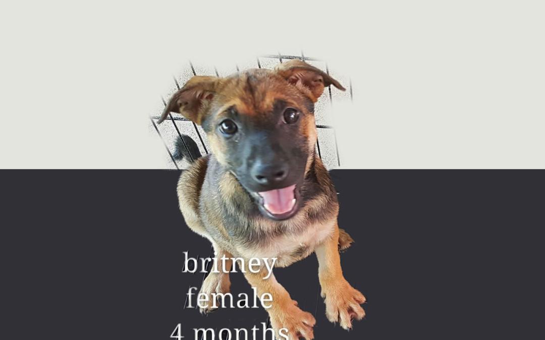 Britney – 4 months old